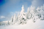 Bachelor-snow-trees-in-sun.jpg
