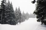 Bachelor-snowy-deserted.jpg