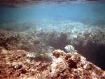 Oahu098.jpg
